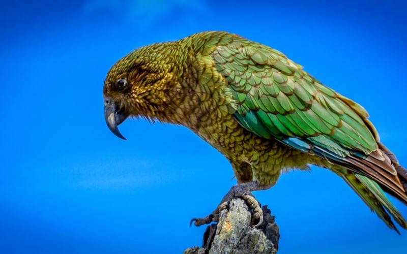 Where to Find New Zealand's Native Birds