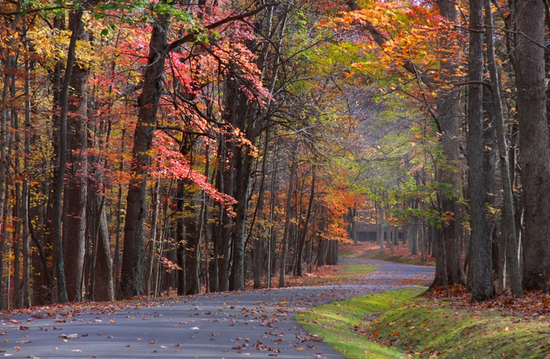 Where will the Autumn path take you?