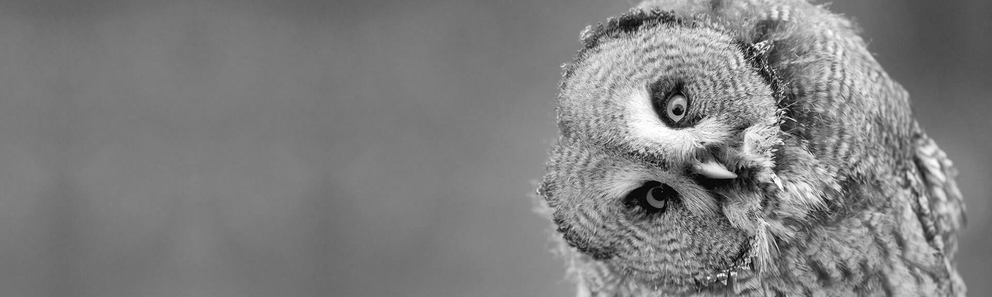 owl, wise owl, wise one, 45 years plus, work, job search, employment, career